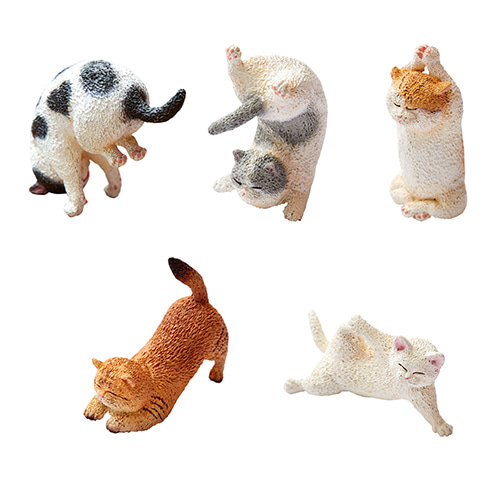 [19년 05월 발매] ANIMAL LIFE Baby Yoga Cat 6개입 BOX